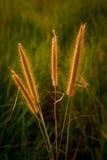 Bedecken Sie Blume mit Gras Stockfotografie
