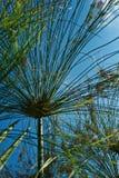 Bedecken Sie Blume mit Gras Lizenzfreie Stockfotografie
