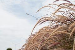 Bedecken Sie Blume mit Gras Stockfoto