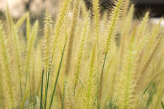 Bedecken Sie Blume mit Gras Stockbild