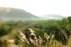 Bedecken Sie Blume mit Gras Stockfotos