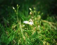 Bedecken Sie Blume mit Gras Lizenzfreie Stockfotos