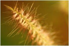 Bedecken Sie Blume mit Gras Lizenzfreies Stockfoto