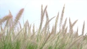 Bedecken Sie Blume mit Gras stock video footage