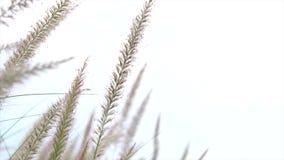 Bedecken Sie Blume mit Gras stock video