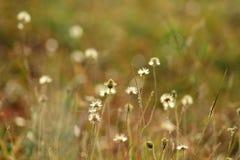 Bedecken Sie Blume mit Gras Stockbilder