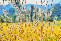 Bedecken Sie Blumen auf einem Hintergrund des gelben Blumenfeldes mit Gras stockfoto