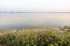 Bedecken Sie Blumen an Wasserreservoir Phra Satung againt der Himmel mit Gras Stockfotografie