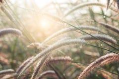 Bedecken Sie Blumenjahreszeit mit Gras, den Morgen feucht mit Tau lizenzfreies stockbild