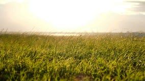 Bedecken Sie das Wellenartig bewegen in den Wind in einem Hurrikan bei Sonnenuntergang mit Gras stock video footage