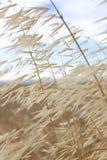 Bedecken Sie den Schlag im Wind mit Gras Stockfoto