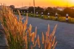 Bedecken Sie die Blume und Sonnenlicht mit Gras, gewöhnt gewesen an Hintergrund Stockbild