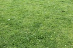 Bedecken Sie grünliches Gelb mit Gras lizenzfreies stockbild
