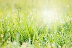 Bedecken Sie Morgentau mit Gras Lizenzfreie Stockfotografie