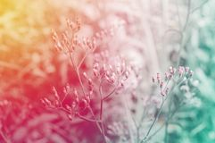 Bedecken Sie neuen Naturhintergrund des Blumenfrühlinges mit Pastell-filte mit Gras Lizenzfreie Stockbilder