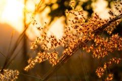 Bedecken Sie selektiven Fokus der Blume im Sonnenlicht mit flacher Tiefe von f mit Gras Lizenzfreie Stockfotografie