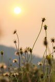Bedecken Sie selektiven Fokus der Blumen mit flacher Schärfentiefe mit Gras Stockfoto