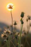 Bedecken Sie selektiven Fokus der Blumen mit flacher Schärfentiefe mit Gras Stockbild