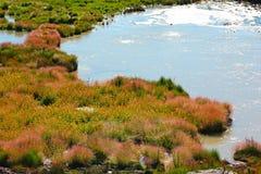 Bedecken Sie und Eilen im Schlamm-Vulkan, Yellowstone Nationalpark mit Gras Lizenzfreies Stockfoto