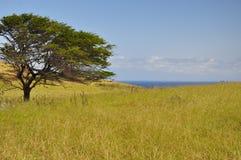 Bedecken Sie und ein Baum auf Maui, Hawaii mit Gras lizenzfreies stockbild