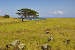 Bedecken Sie und ein schöner Baum auf Maui, Hawaii mit Gras stockbild