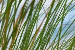 Bedecken Sie Unschärfehintergrund die Helligkeit des Himmels im Sommer mit Gras Stockbilder