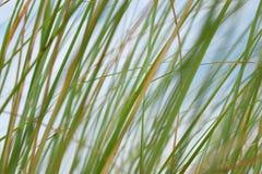 Bedecken Sie Unschärfehintergrund die Helligkeit des Himmels im Sommer mit Gras Stockfoto