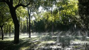 Bedecken Sie Wasserspray im Stammholzwald, Sonnenschein auf Rasenhintergrundhintergrund mit Gras stock video