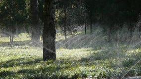 Bedecken Sie Wasserspray im Stammholzwald, Sonnenschein auf Rasenhintergrundhintergrund mit Gras stock footage