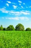 Bedecken Sie Wiese und Bäume unter dem blauen Himmel mit Gras Lizenzfreie Stockfotografie
