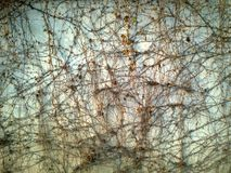 Bedeckt mit verwelkter Kriechpflanzenwand Stockfotos