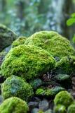 Bedeckte Felsen mit Moos Lizenzfreies Stockbild