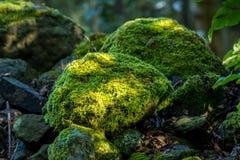 Bedeckte Felsen mit Moos Lizenzfreie Stockfotografie