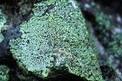 Bedeckter Felsen Stockfotografie