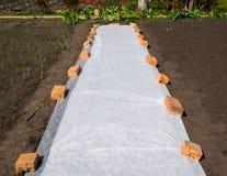 Bedeckungsmaterialverbreitung aus den Grund schützt die Trieb vor Frösten Stockfoto