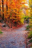 Bedekte weg door de de bomenherfst van het stadspark royalty-vrije stock foto's