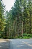 bedekte weg met in de schaduw gesteld licht van bosrand in de zomermiddag royalty-vrije stock afbeelding