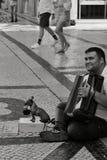 Bedelaar die de harmonika spelen die met zijn hond bedelen stock afbeeldingen