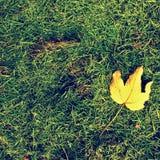 Bederf geoogst gras in grote groene geurhoop in hoek van tuin Royalty-vrije Stock Foto's