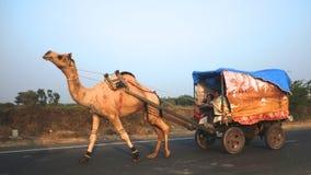 Bedevaart in Gujarat Royalty-vrije Stock Fotografie