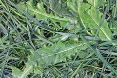 Bedew черенок и листья травы стоковые изображения