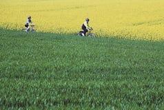 Bedfordshire delle colline del barton dei ciclisti Fotografia Stock Libera da Diritti