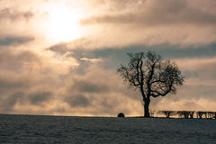 Bedfordshire winter landscape with oak tree Stock Photo