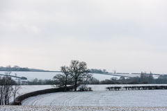 Bedfordshire winter landscape with oak trees Royalty Free Stock Photography