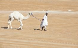Bedhouin z wielbłądem w pustyni Zdjęcia Royalty Free