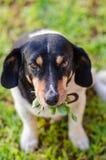 bedjande hund royaltyfri foto