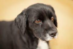 Bedjande hund Royaltyfri Fotografi