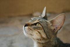 bedjande kattcrete mat Arkivfoto