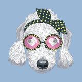 Bedlington terrier divertente del cane dei pantaloni a vita bassa del fumetto di vettore Immagine Stock