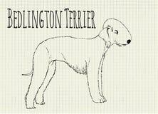 Bedlington terrier drawing on notebook sheet. Bedlington terrier  drawing on notebook sheet Stock Image